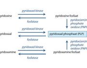 Pyridoxineafhankelijke epilepsie