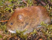 Acute nierinsufficiëntie bij kinderen, dat muisje heeft een staartje!